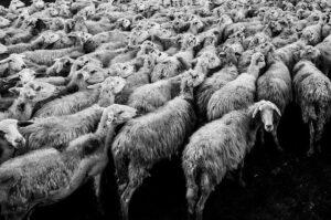 Read more about the article Die große bimodale Scheitelpunktkatastrophe 2021 – was wird sich durchsetzen? – Freiheit oder Tyrannei?…