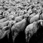 Die große bimodale Scheitelpunktkatastrophe 2021 – was wird sich durchsetzen? – Freiheit oder Tyrannei?…
